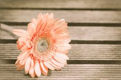 Flor sobre suelo de madera