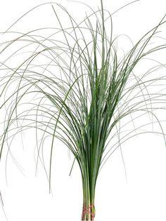 Bear Grass | Bear grass is a terrific to use in design work because of its flexibility and versatility.