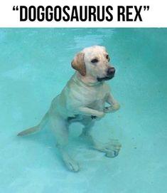 Relaxamento em piscina de águas quentes? Muita folga ! Olha a carinha dele!