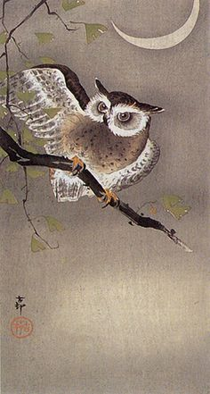 Owl on Ginkgo Branch by Ohara Koson