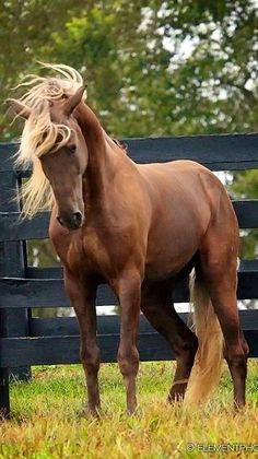 .can i have a horse like this