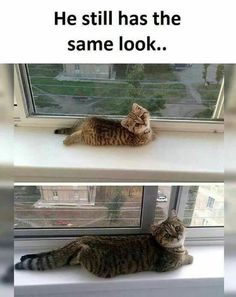 The Same Look