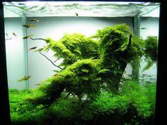 Aquarium Inspiration on Pinterest Aquascaping, Aquarium and Fish ...