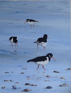 Oystercatcher group Watercolor Bird, Watercolour Painting, Painting & Drawing, Reptiles, Puffins Bird, Bird Paintings, Special Images, Oyster Bar, Bird Illustration