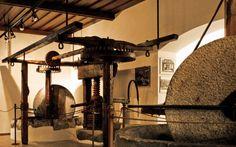 Il museo dell'olio d'oliva a Cisano