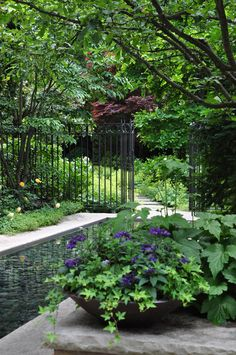 Garden of shade...  Plant some white hydrangeas and we're talking serious fabulous green/white garden setting!!!!!!!