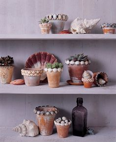 Blog Home      Indoor projects      Outdoor Living      Outdoor Projects    Embellish Flower Pots With Seaside Charm  Posted by: Martha Stewart on August 3rd, 2012 | 22 Comments    Give terra cotta pots an aged look by painting them white and then sanding the color for an uneven finish. Finish the look with a trim of delicate seashells. Get your children involved by having them hunt for the shells!  Aged terra cotta pots embellished with seashells    Materials        White latex paint, flat fini