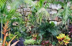 The International Cordyline Society - Members Gardens