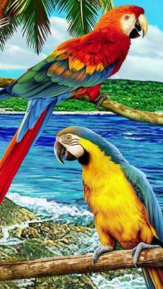 Tropical Birds, Exotic Birds, Tropical Art, Colorful Animals, Colorful Birds, Cute Birds, Pretty Birds, Most Beautiful Animals, Beautiful Birds