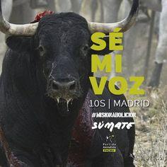 Rompesuelas fue el último toro lanceado en Tordesillas. Que su recuerdo sea el principio del fin. #MisionAbolicion