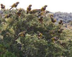 Resultado de imagen para loros patagonia