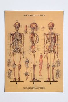 bones and bones