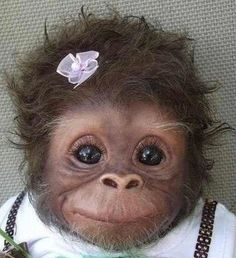 Fluffy monkey - SunnyLOL