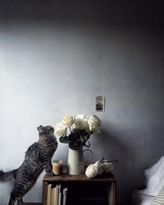 """Bedside, morning light. Kohi knows how to stop and smell the roses. Last night @matthewlud walked through the door with a bouquet of white roses. Kohi and Miruku were like """"oh you shouldn't have"""". They're certain they were for them. #mycatkohi #theartofslowliving #localmilkhome"""