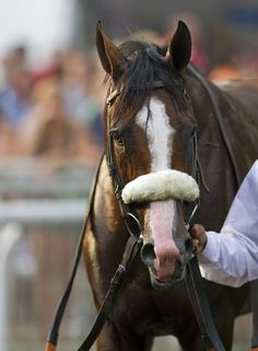 Union Rags officially retired. There seems to be a lot of good horses getting injured lately.