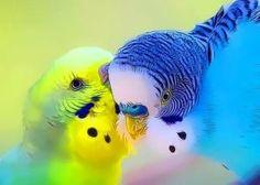 Parrots by Certain Sparkle