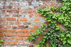 foliage on a brick wall