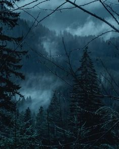 Breathtaking Moody And Mysterious Forest Photography By Dylan Furst Misty Forest, Dark Forest, Magical Forest, Forest Rain, Night Forest, Forest Photography, Landscape Photography, Ocean Photography, Photography Tips