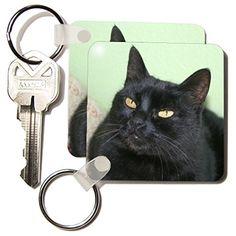 Taiche - Photography - Cats - Black Cat Portrait A black ... https://www.amazon.com/dp/B00GX02BIA/ref=cm_sw_r_pi_dp_4jhHxbBJAQ3P2