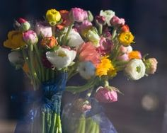 Ranunculus....one of my FAVORITE flowers! tiny yet so pretty