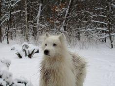 white Wolf 1/12