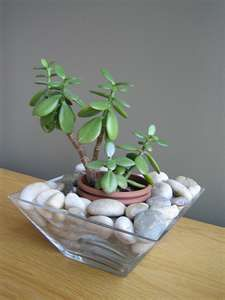 alternative way to display a plant