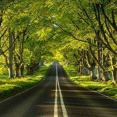Beech Avenue ~ Dorset, England (Photo by Paul Wynn-Mackenzie) Beautiful Roads, Beautiful Landscapes, Beautiful World, Beautiful Places, Tree Tunnel, Dorset England, Belle Photo, Wonders Of The World, Nature Photography