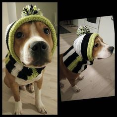 I saw my stepbrother @viluthestaffie and pretty girl @adathestaffie have a very fancy winterhats so we made this to me too  Thank you for ideas buddies  Now my ears stay warm  #hat #dogclothes #dog #dogslife #crochet #crochetdoghat #doghat #warm #staywarm #clothesfordogs #clothes #diycrochet #diy #happydogs #staffygram #staffordshirebullterrier #staffypuppy #puppy #winter #funny #finland #talvipipo #pipo #koirallepipo #virkkaapipo #virkkaus #virkkaushullu #lämmintä by drogostaffie…