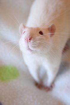 Linus' cute pose number 188368374 by Honey Pie!, via Flickr