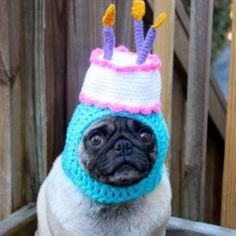 """Top 10 Party Time Dogs Celebrating Birthdays """"Please don't blow out my candles!"""" #dogsarelove #birthday #PugLife"""