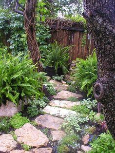 Beautiful garden path featuring sword ferns in pots.