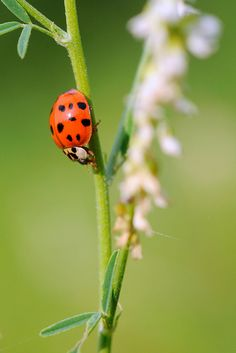 Coccinella------But this great sacrifice was not made in order to create in the Father's heart a love for man, not to make him willing to save. No, no! God so loved the world, that he gave his only begotten Son.  -