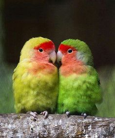 I love the little fluffy parrots