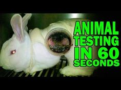 Animals Used for Experimentation | The Issues | PETA.  This wont be easy to watch, but it shows just how cruel and filthy humans can be to animals. I am absolutely disgusted to be a human.