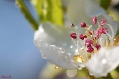 Spring by ChloeBn on 500px