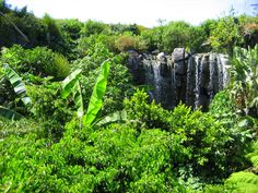 Wasserfall Dschungel Wilderness, Plants, Vacation Pictures, Jungles, Waterfall, Wildlife Nature, Plant, Planting, Planets