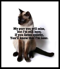 My purr you will miss . . .