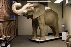Jumbo (university mascot) - Photo: Alonso Nichols/Tufts University