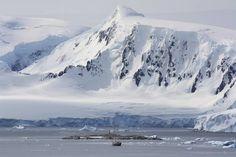Antarctica Peninsula. #Antarctica Holland America Line, South America, Penguin Bird, Orkney Islands, Italy Painting, Marauder, Prince Edward Island, South Island, Antarctica