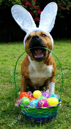 Easter Boom7