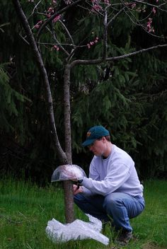 Knowing how to keep a squirrel out of fruit trees and other tall plants will help you enjoy their antics without worrying about their destructive natural habits. This article can help.