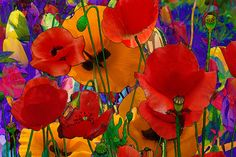 Poppies in Paradise by DFDart, via Flickr