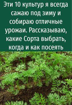 Side Garden, Garden Edging, Succulent Outdoor, Hosta Gardens, Diy Garden Decor, Vegetable Garden, Outdoor Gardens, Succulents, Herbs