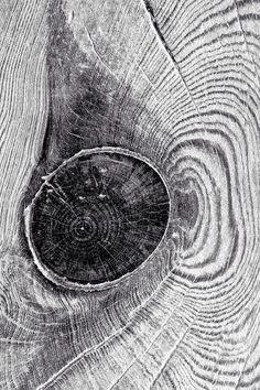 Don Jackson | wood knot