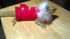 This made me laugh!  A sweater for a bearded Dragon lizard.  Who knew?  Red Santa Beardie Sweater. $15.00, via Etsy.
