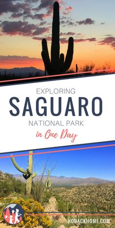 Saguaro National Park in Tucson Arizona is a great park that visitors can experience in one day or over several days since it's right in the city! #tucson #saguaro #findyourpark