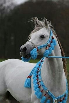 Arabian horse Egyptian. I think this is really pretty :)
