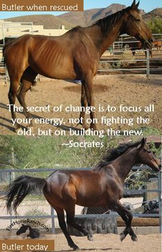 What we focus on is what we experience. Want something to change? Change your focus! If Butler had focused on his abuse and neglect before he was rescued he wouldn't be the horse he is today. Today he's confident, strong, full of life, and a comedian! What change have you experienced in life because you changed your focus?