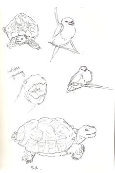 Tortoise yawning at Camperdown Wildlife Centre Sketchbook Drawings, Sketches, Observational Drawing, Tortoise, Centre, Turtle, Dresser, Wildlife, Animation