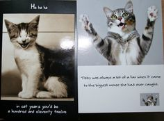 5 Best Images Of Free Printable Cat Birthday Cards